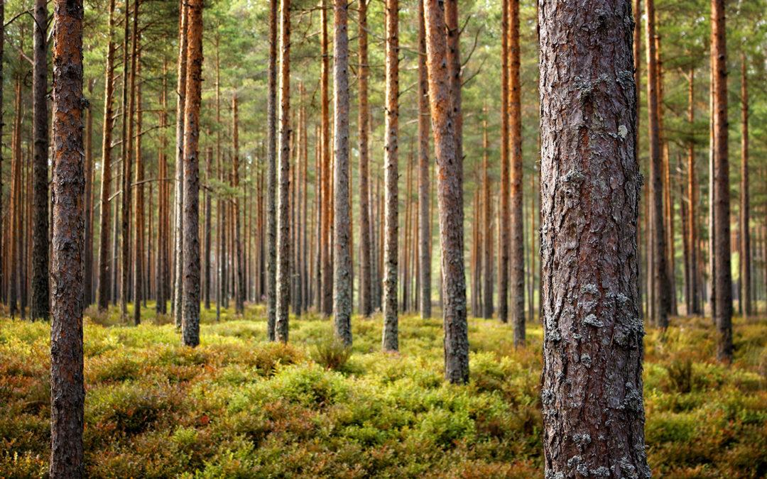 Der Holzmarktbericht für August 2020