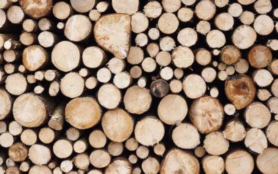 Holzmarktbericht Jänner 2021