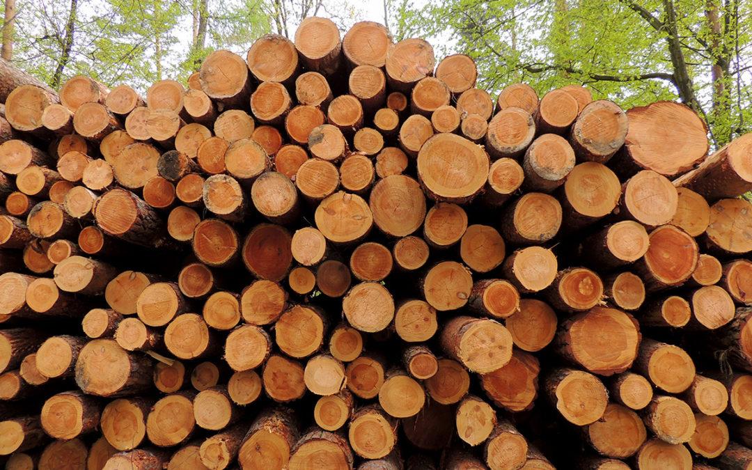 Holzmarktbericht September 2020