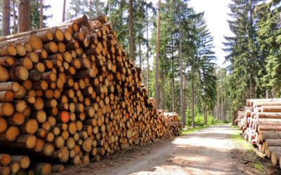 Holzmarktbericht Dezember 2020