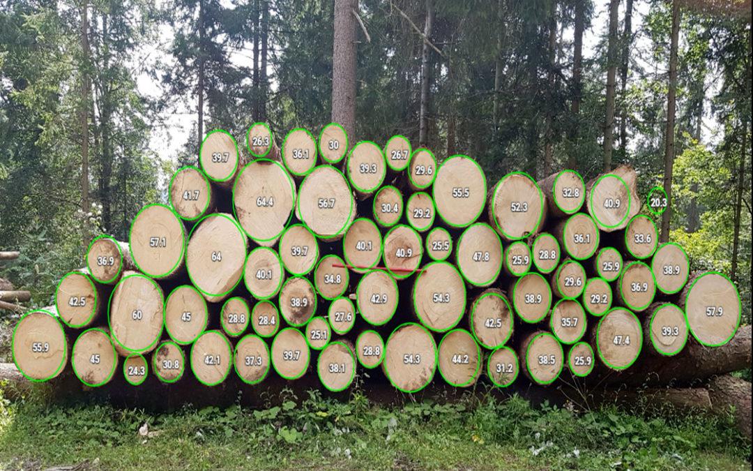 Holzmarktbericht Februar 2021
